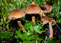 (4) October-Lound-Clumber Park FUNGI Monday